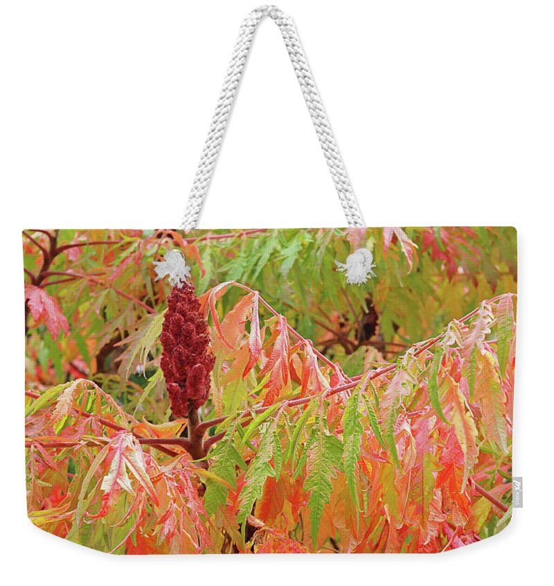 Autumn Leaves Weekender Tote Bag featuring the photograph Sumac Tree Autumn Reflections by Gill Billington
