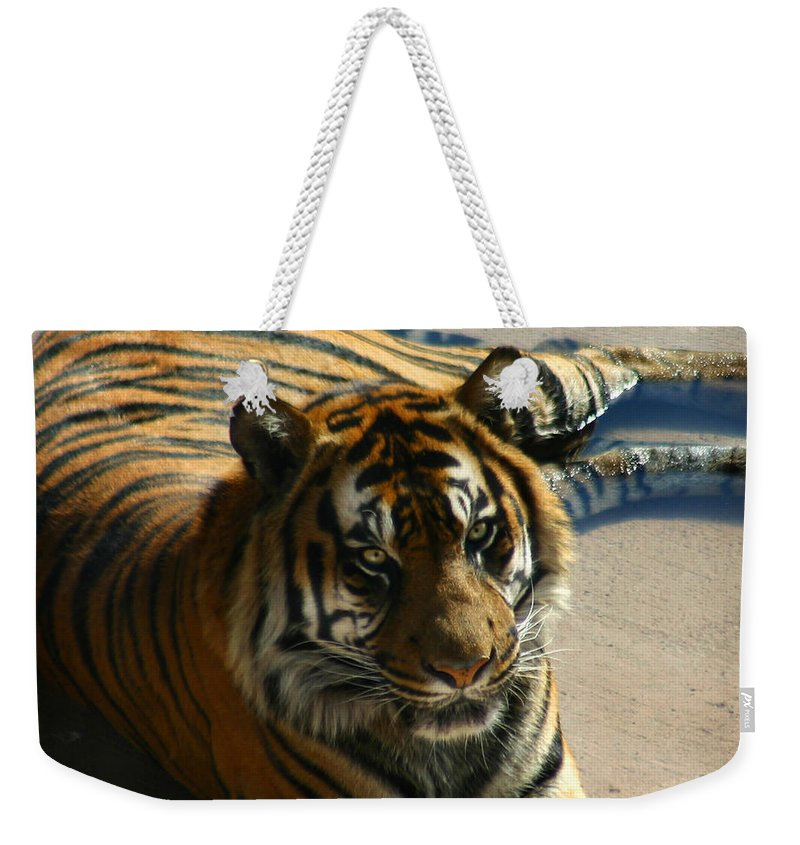 Tiger Weekender Tote Bag featuring the photograph Sumatran Tiger by Anthony Jones