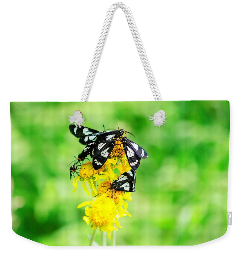 Arizona Weekender Tote Bag featuring the photograph Summer Field by CEB Imagery