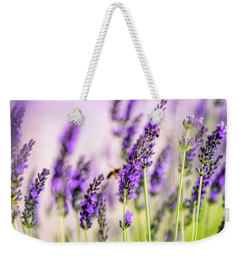 Lavender Weekender Tote Bag featuring the photograph Summer Lavender by Nailia Schwarz