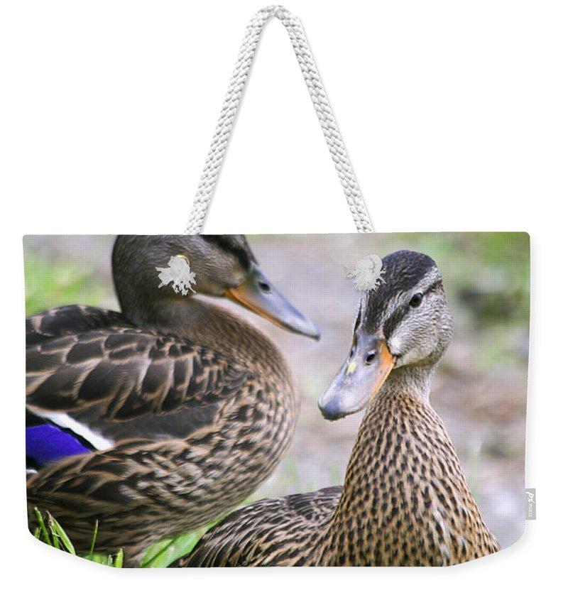 Ducks Weekender Tote Bag featuring the photograph Summer Mallard Couple by Deborah Benoit
