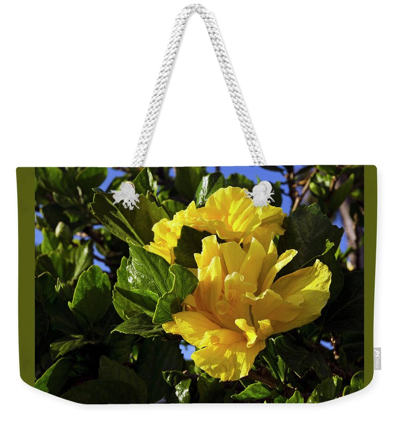 Hibiscus Weekender Tote Bag featuring the photograph Sun-drenched Yellow Hibiscus by Marie Hicks