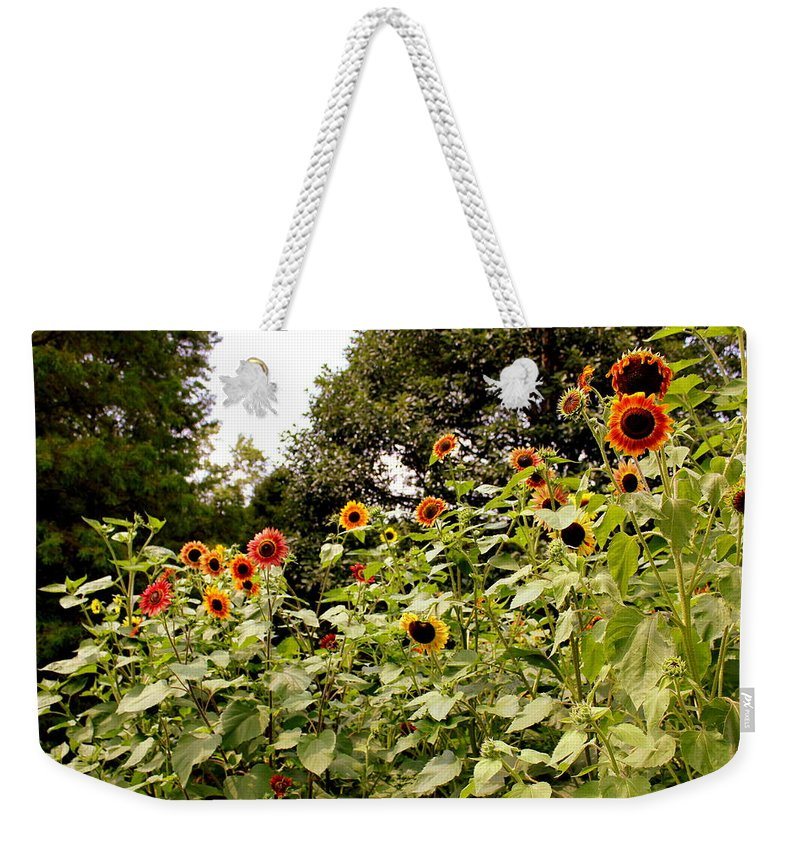 Sun Flowers Weekender Tote Bag featuring the photograph Sun Flowers Of Chanticleer by Deborah Crew-Johnson
