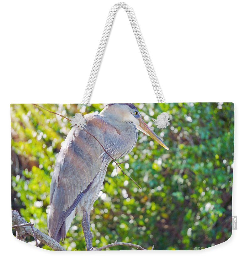 Ading Weekender Tote Bag featuring the photograph Sun Streaked by Judy Kay
