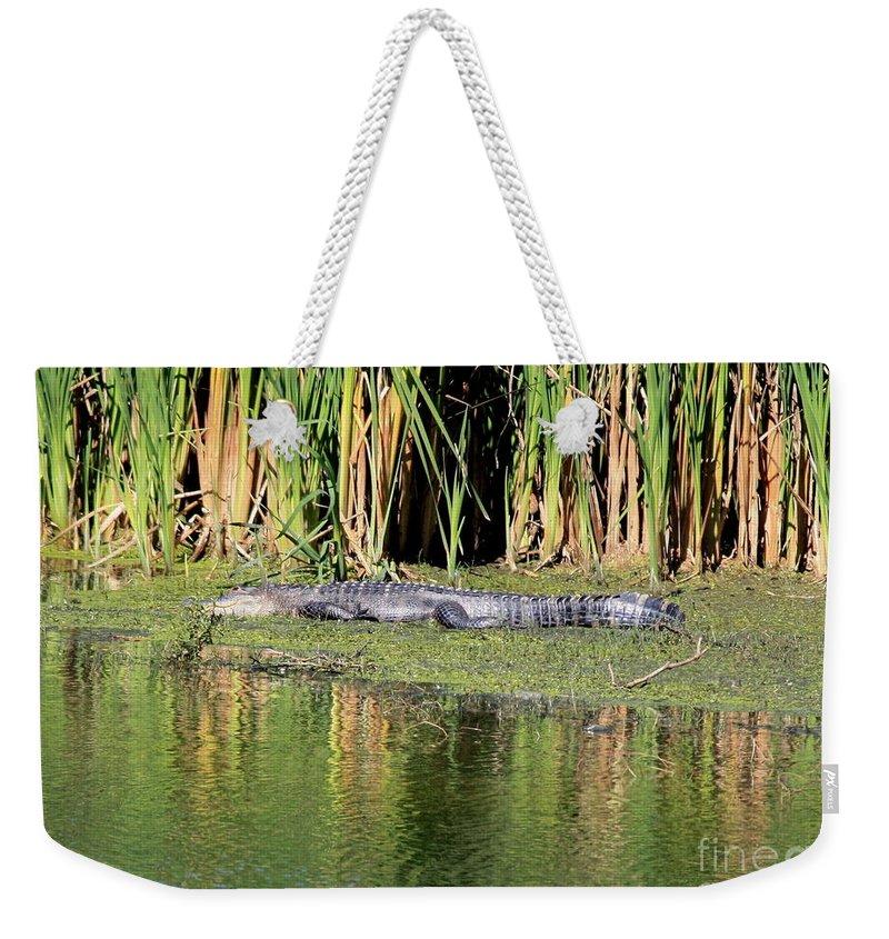 Weekender Tote Bag featuring the photograph Sunbathing Gator by Carol Groenen