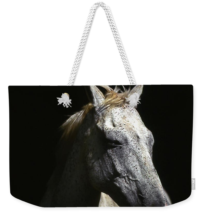 Horse Weekender Tote Bag featuring the photograph Sundance by Jim Cazel