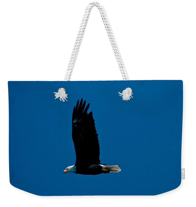 Eagle Weekender Tote Bag featuring the photograph Sunday Morning Flight by Paul Mangold