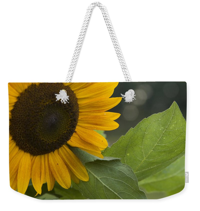 Flower Nature Farm Yellow Bright Sunflower Green Leaf Leaves Close Garden Organic Happy Weekender Tote Bag featuring the photograph Sunflower by Andrei Shliakhau