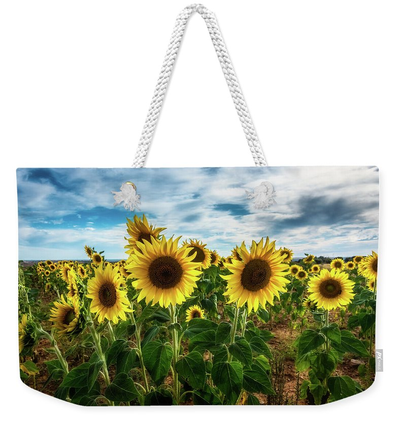 Sunset Weekender Tote Bag featuring the photograph Sunflower II by Jose maria Luis marquez