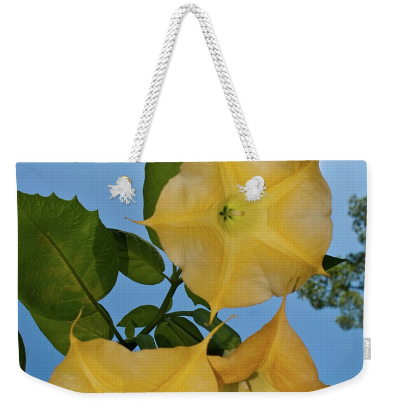 Joy Weekender Tote Bag featuring the photograph Sunglow Angel Trumpet by Douglas Barnett