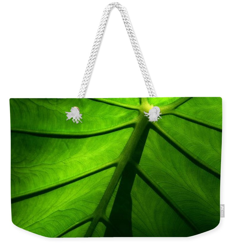 Green Weekender Tote Bag featuring the photograph Sunglow Green Leaf by Patricia L Davidson