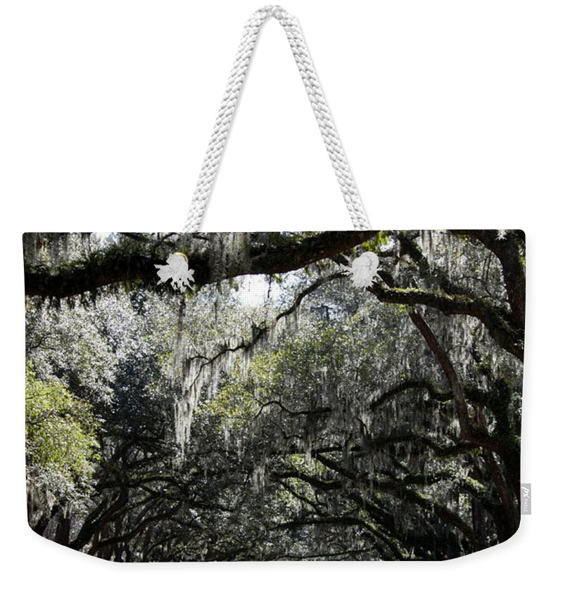Live Oaks Weekender Tote Bag featuring the photograph Sunlight And Shadows On Live Oaks by Carol Groenen