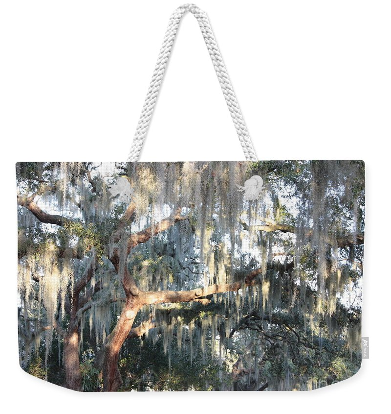 Spanish Moss Weekender Tote Bag featuring the photograph Sunlight On Mossy Tree by Carol Groenen