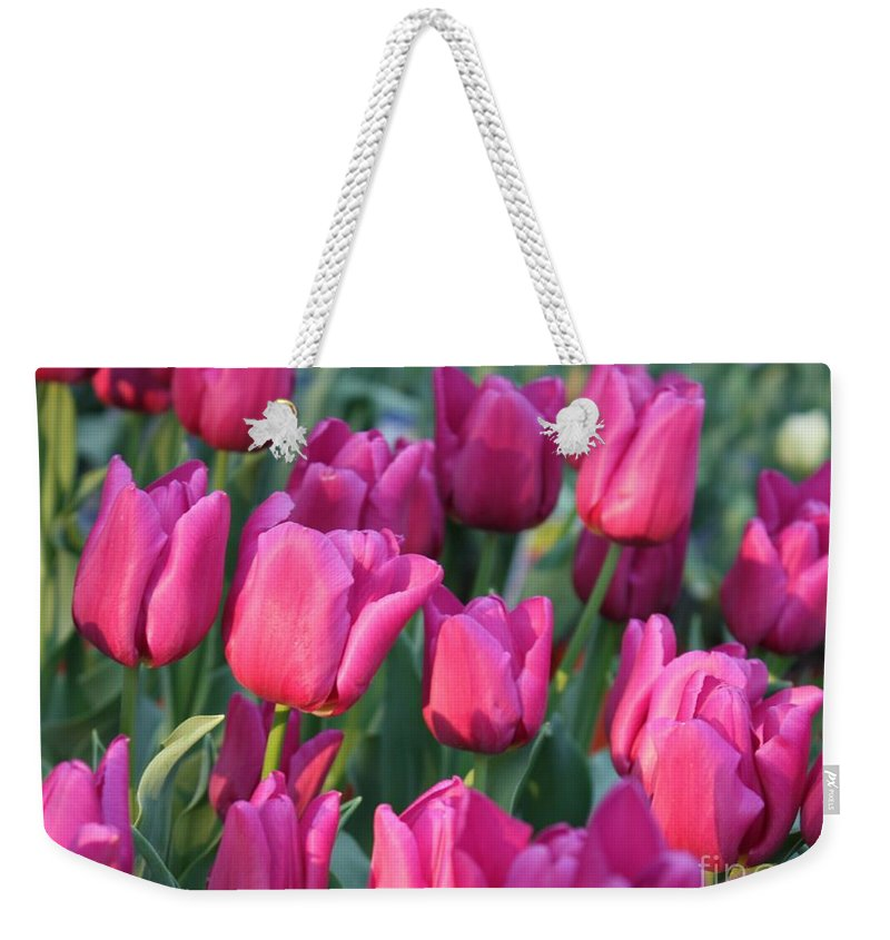 Pink Tulips Weekender Tote Bag featuring the photograph Sunlight On Pink Tulips by Carol Groenen