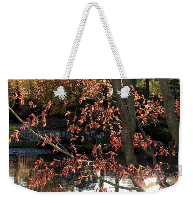 Maple Tree Weekender Tote Bag featuring the photograph Sunlight Through Japanese Maple by Carol Groenen