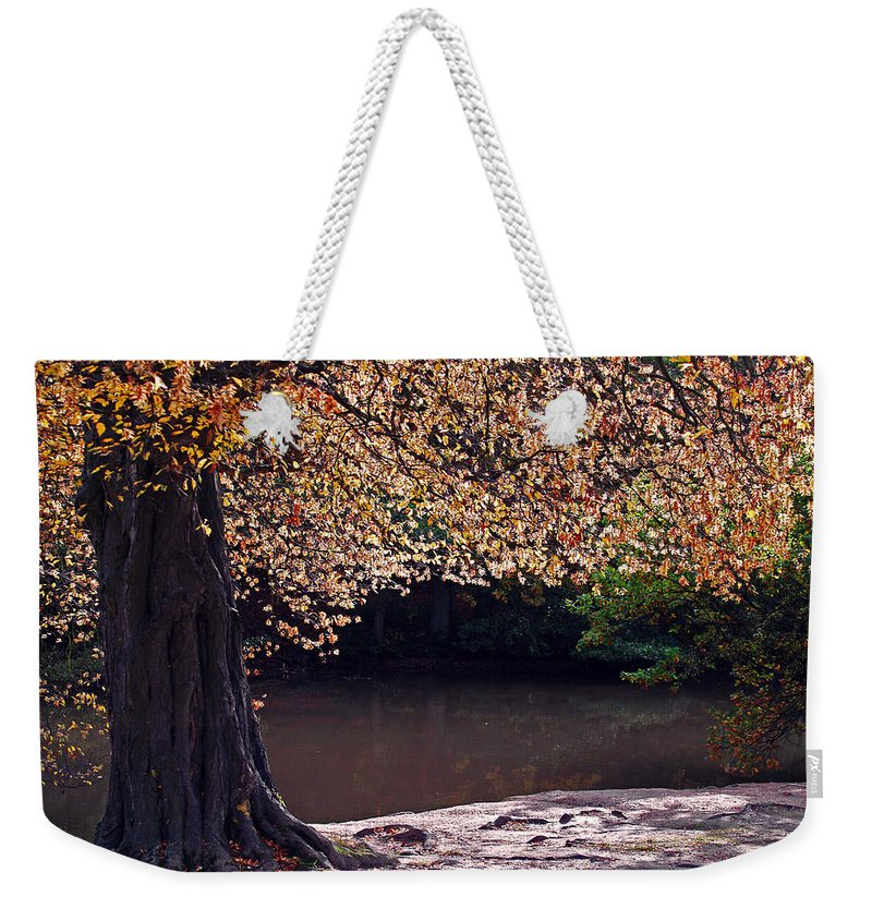 Leaves Weekender Tote Bag featuring the photograph Sunlit Autumn Canopy by Bel Menpes