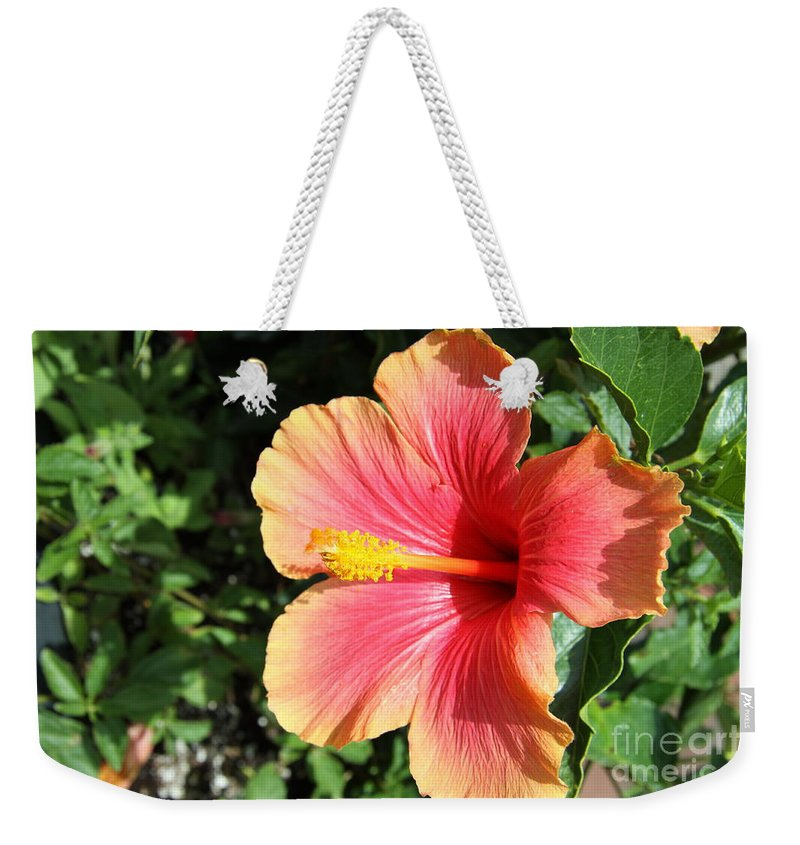 Hibiscus Weekender Tote Bag featuring the photograph Sunlit Beauty by Christiane Schulze Art And Photography
