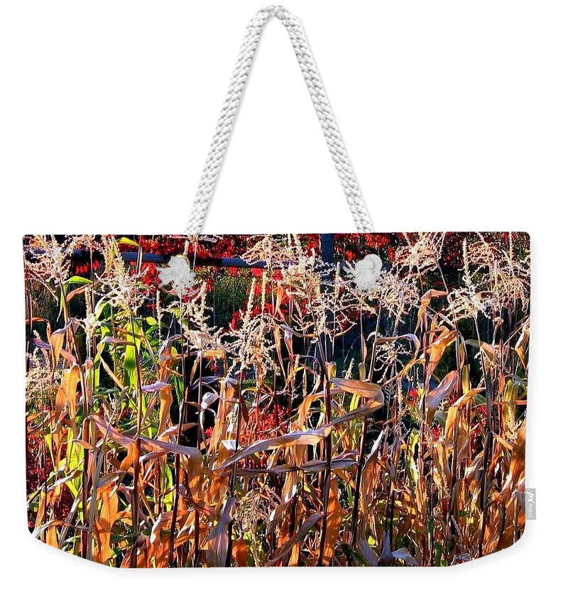 Fall Weekender Tote Bag featuring the photograph Sunlit Fall Corn by Will Borden
