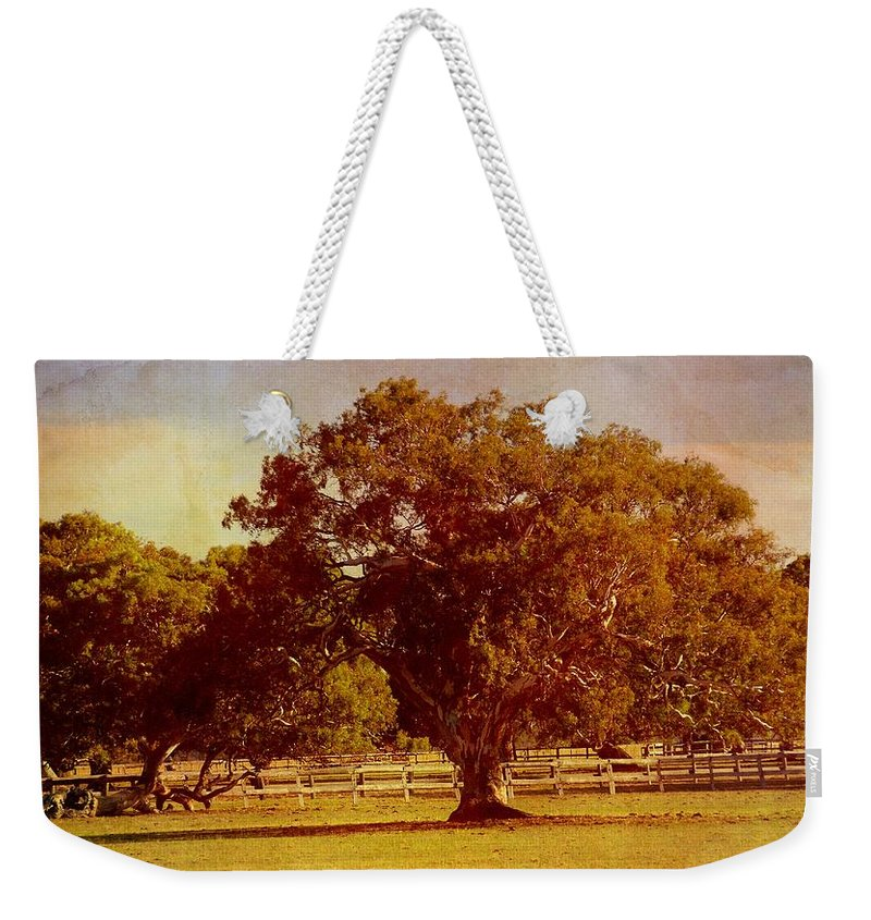 Trees Weekender Tote Bag featuring the photograph Sunlit Landscape by Georgiana Romanovna