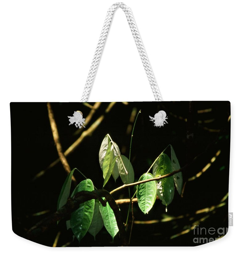 Leaves Weekender Tote Bag featuring the photograph Sunlit Leaves by Kathy McClure