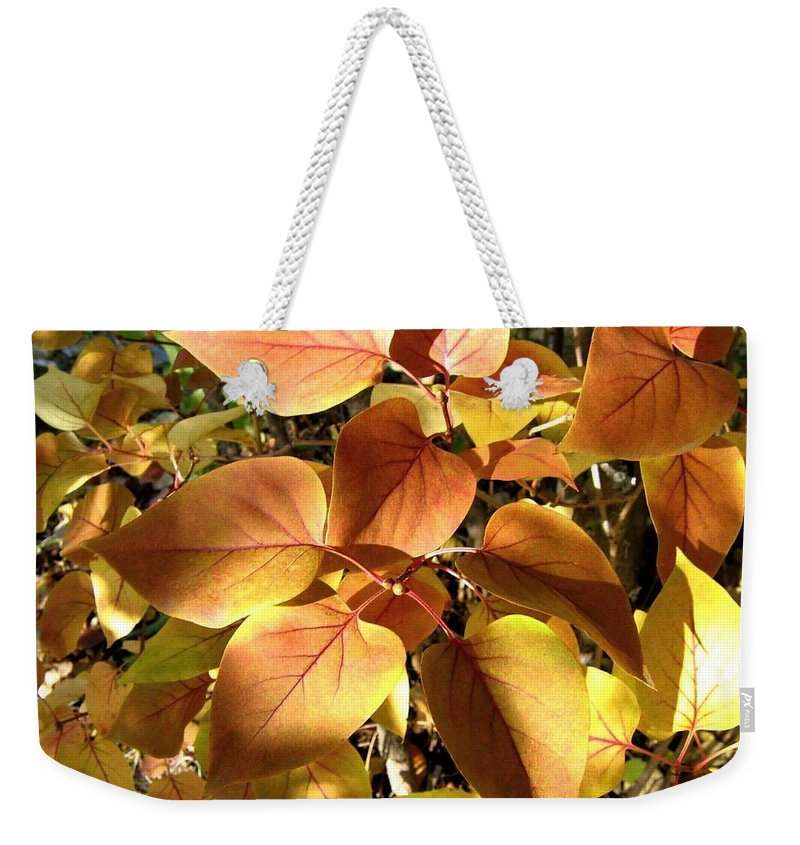 Lilac Leaves Weekender Tote Bag featuring the photograph Sunlit Lilac Leaves by Will Borden