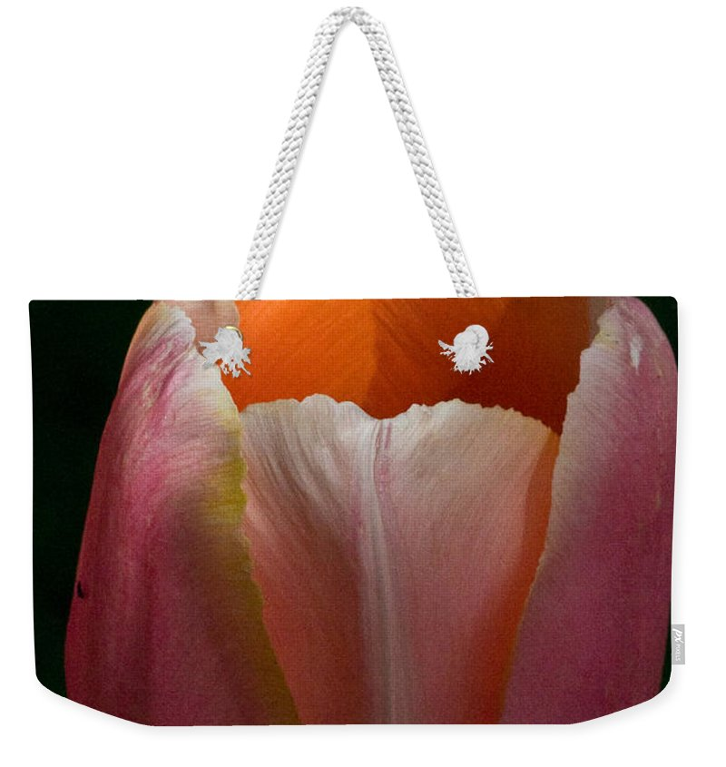 Flower Weekender Tote Bag featuring the photograph Sunlit Tulip by Martha Johnson