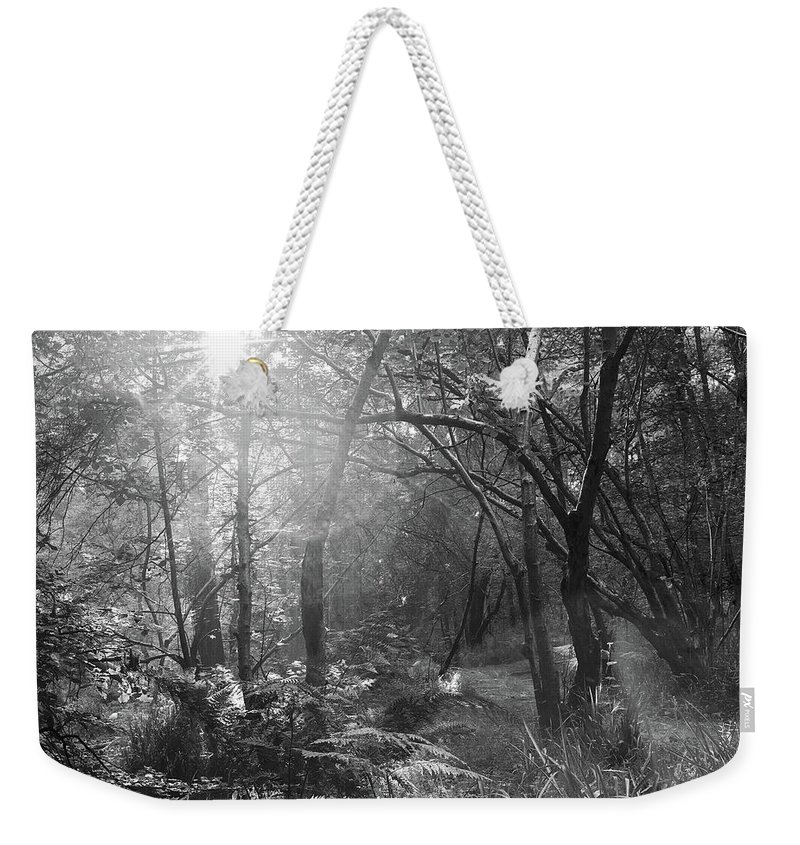 Weekender Tote Bag featuring the photograph Sunlit Woods, West Dipton Burn by Iain Duncan