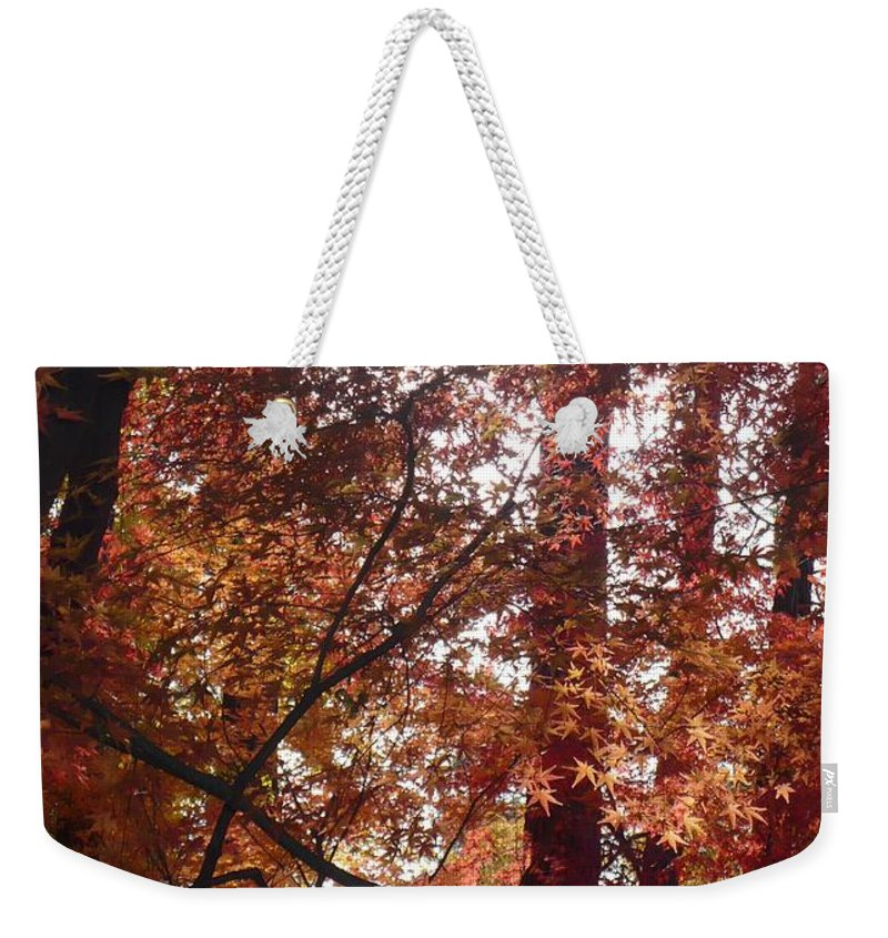 Fall Weekender Tote Bag featuring the photograph Sunny Autumn Day Poster by Carol Groenen
