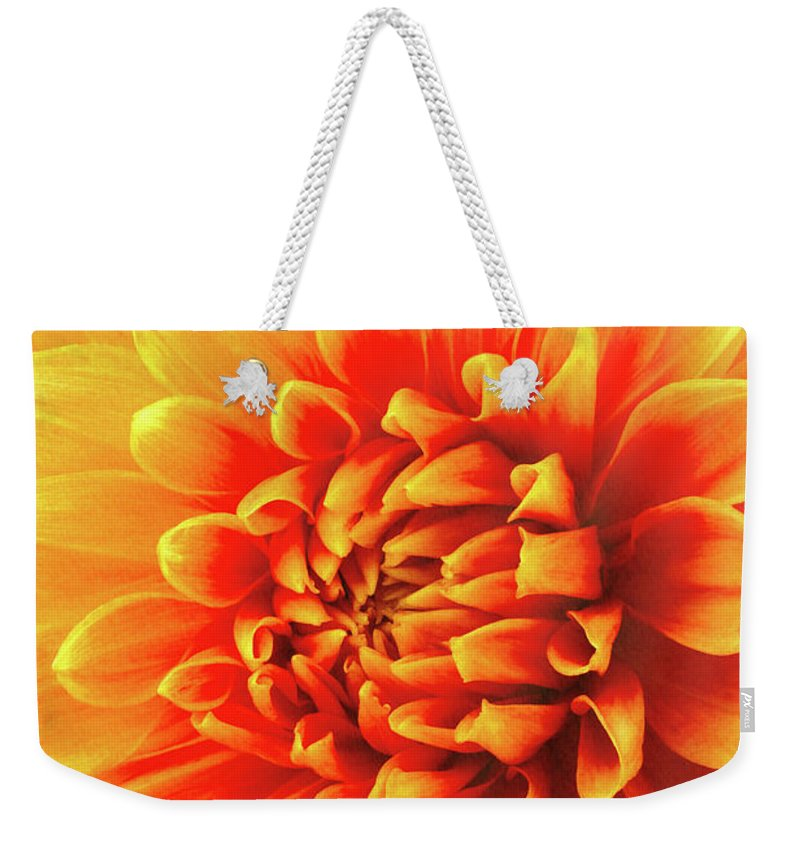 Color Weekender Tote Bag featuring the photograph Sunny Dahlia by Garry Gay