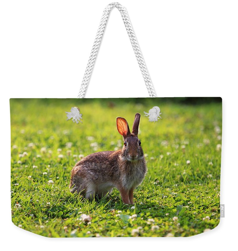 Cute Rabbits Weekender Tote Bag featuring the photograph Sunny Bunny by Brian Manfra