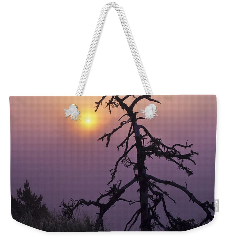 Coast Weekender Tote Bag featuring the photograph Sunrise And Fog by Robert Potts