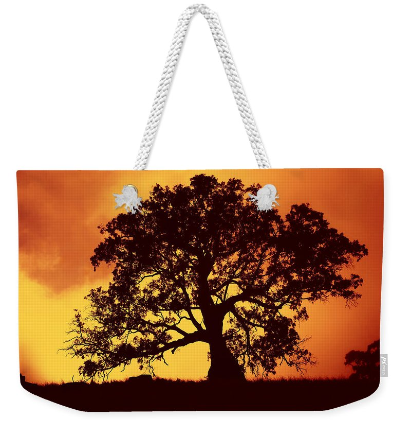 Gum Tree Weekender Tote Bag featuring the photograph Sunrise Gum by Mike Dawson