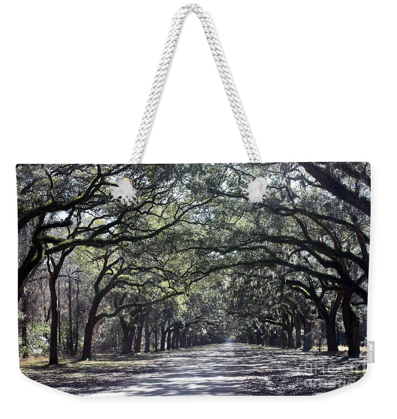 Row Of Trees Weekender Tote Bag featuring the photograph Sunshine On Live Oaks by Carol Groenen