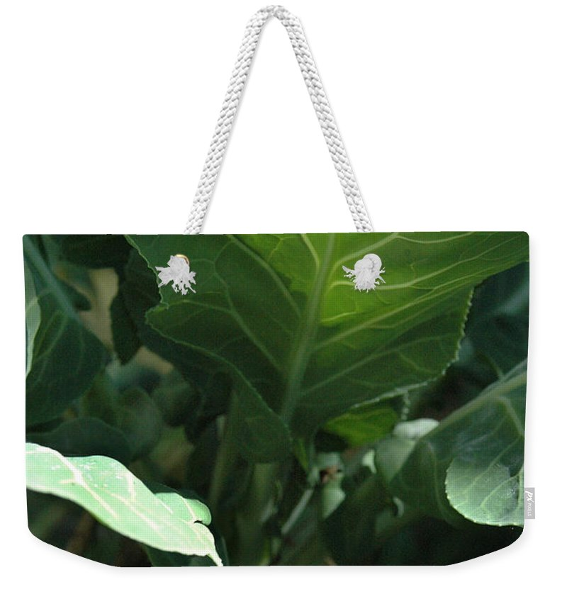 Cabbage Weekender Tote Bag featuring the photograph Super-fly Cabbage by Trish Hale