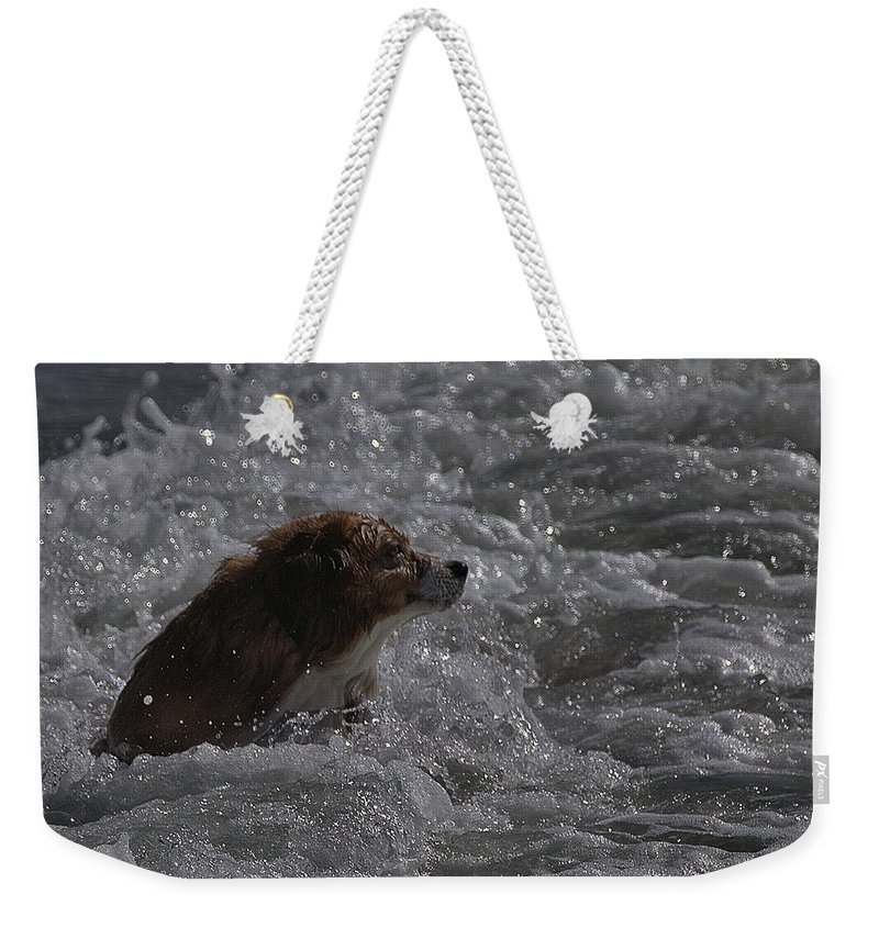 Surf Weekender Tote Bag featuring the photograph Surfer Dog 1 by Michael Gordon