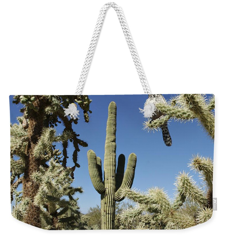 Saguaro Weekender Tote Bag featuring the photograph Surrounded Saguaro Cactus Wren by Jill Reger