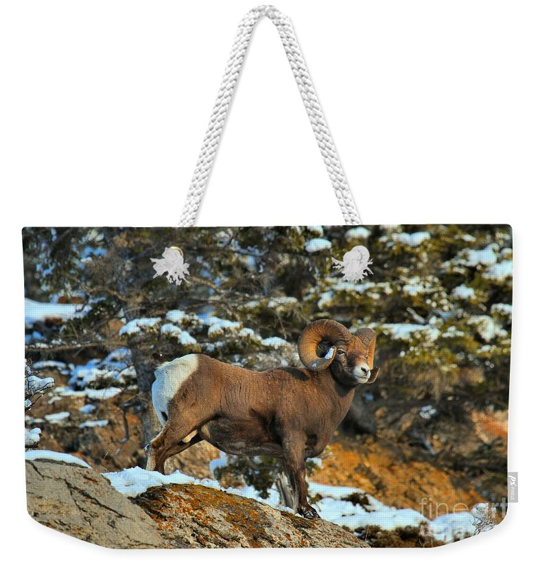 Jasper Bighorn Weekender Tote Bag featuring the photograph Surverying The Jasper Landscape by Adam Jewell