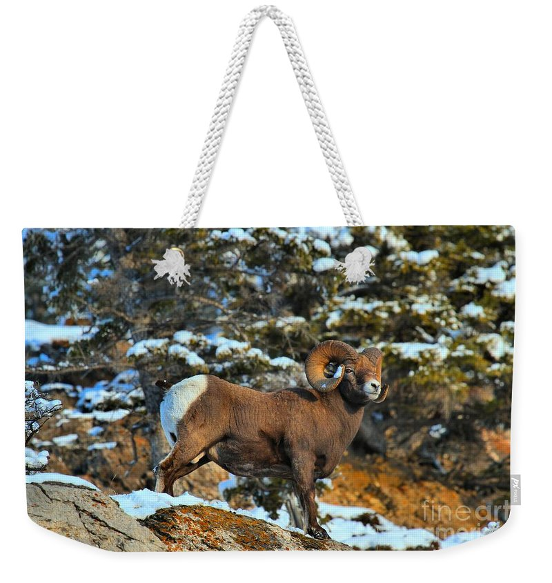 Jasper Bighorn Weekender Tote Bag featuring the photograph Surveying The Jasper Landscape by Adam Jewell