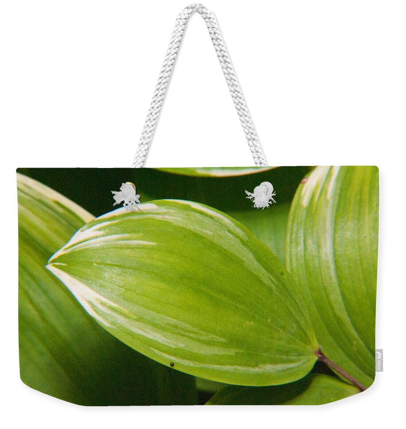 Plant Weekender Tote Bag featuring the photograph Sweeping Green by Douglas Barnett