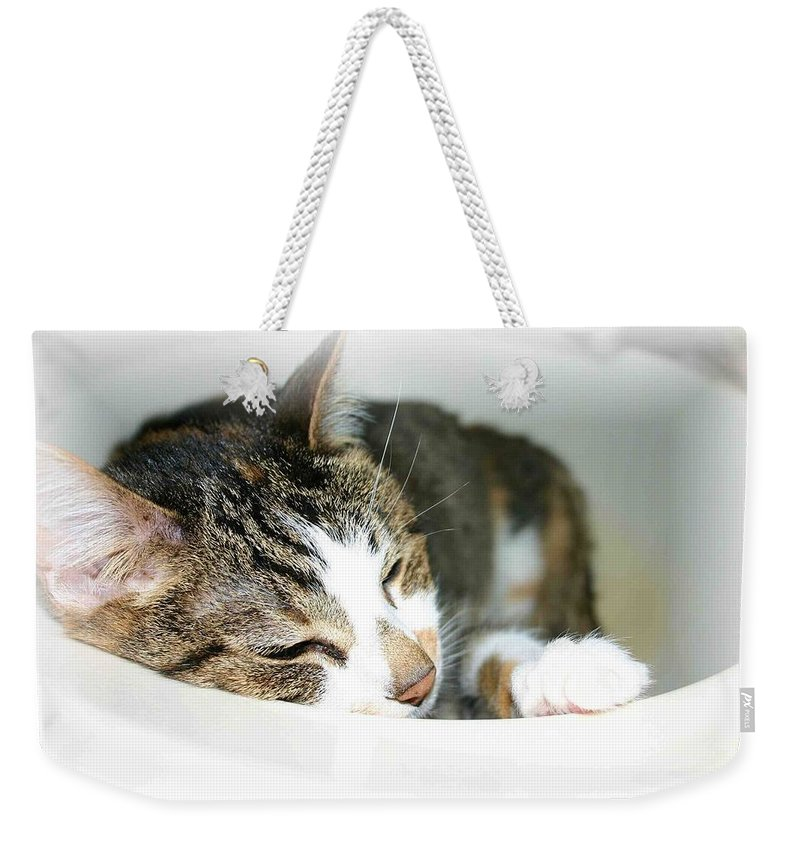 Cat Weekender Tote Bag featuring the photograph Sweet Dreams by Nelson Strong