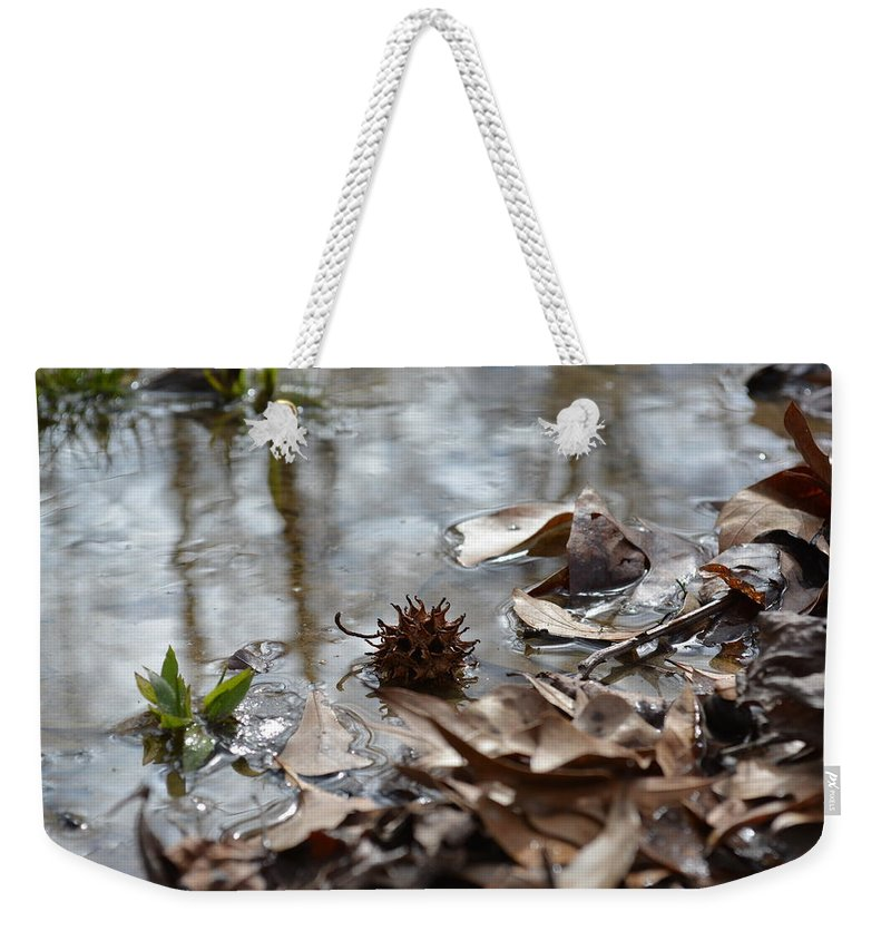 Sweet Gum Weekender Tote Bag featuring the photograph Sweet Gum Seed Pod In Mississippi Winter by Gena Koelker