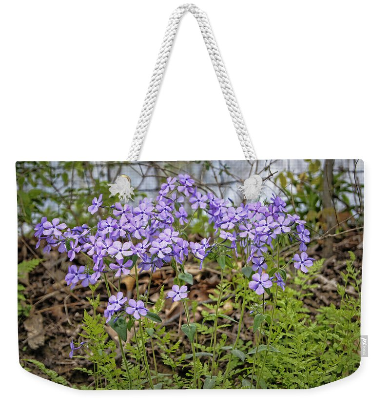 Spring Weekender Tote Bag featuring the photograph Sweet William by Cricket Hackmann