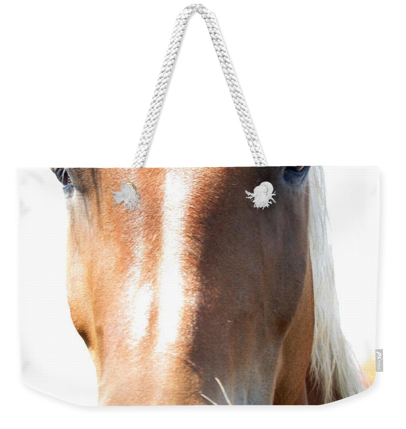 Horse Weekender Tote Bag featuring the photograph Sweetie by Amanda Barcon