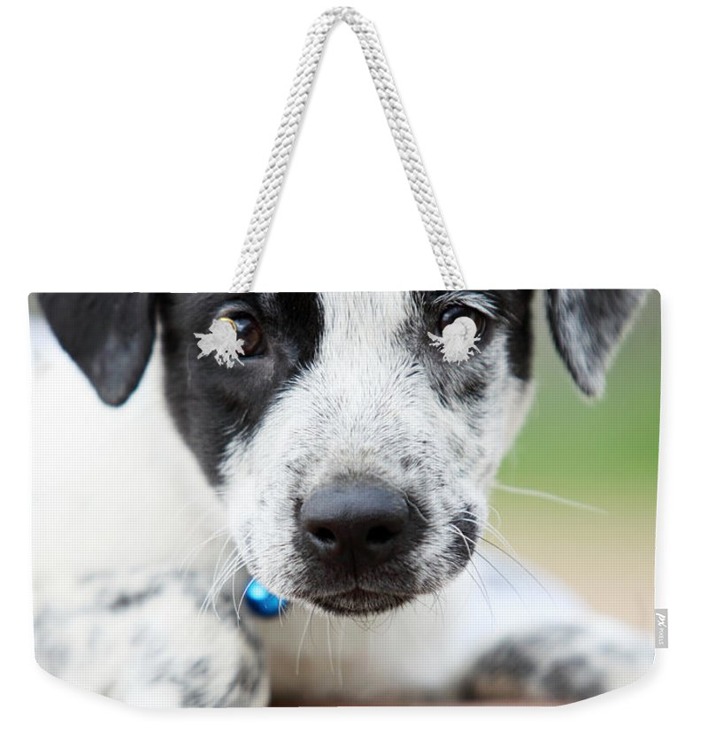 Puppy Weekender Tote Bag featuring the photograph Sweetness by Amanda Barcon