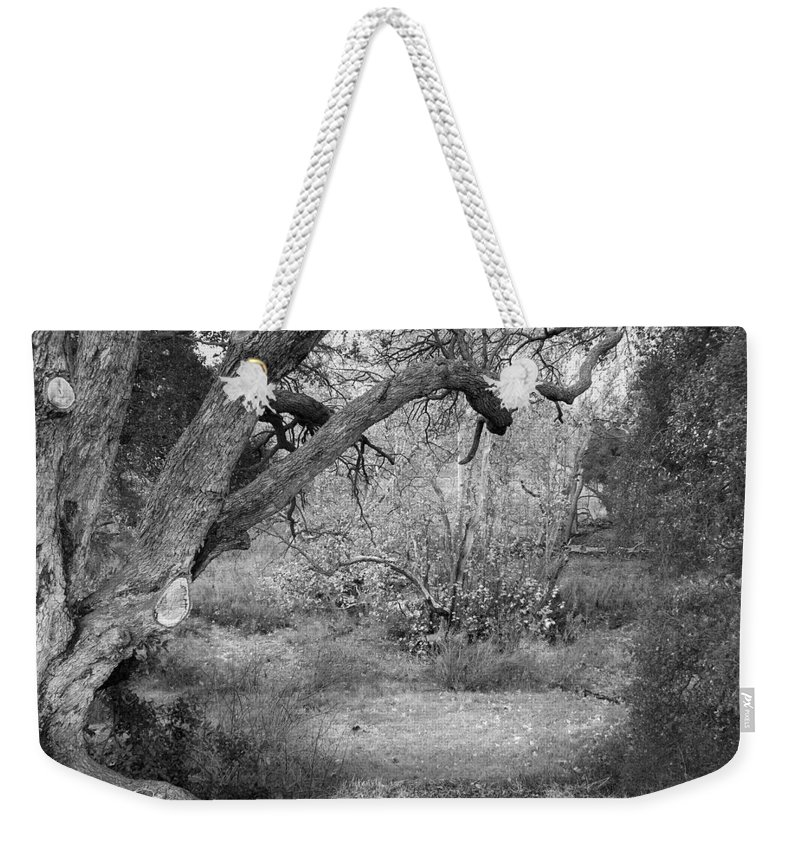 Landscape Weekender Tote Bag featuring the photograph Sycamore Grove Black And White by Karen W Meyer