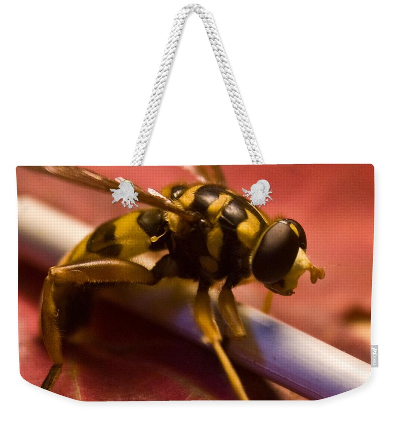 Insect Weekender Tote Bag featuring the photograph Syrphid Fly Poised by Douglas Barnett