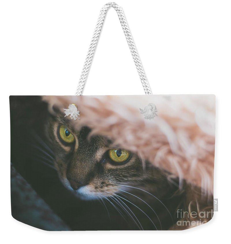 Tabby Weekender Tote Bag featuring the photograph Tabby Cat Looking From Beneath A Blanket by Alexandru Handrache