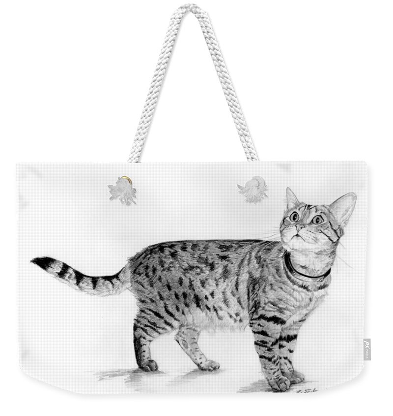 Cat Weekender Tote Bag featuring the drawing Tabby Cat Looking Up by Phyllis Tarlow