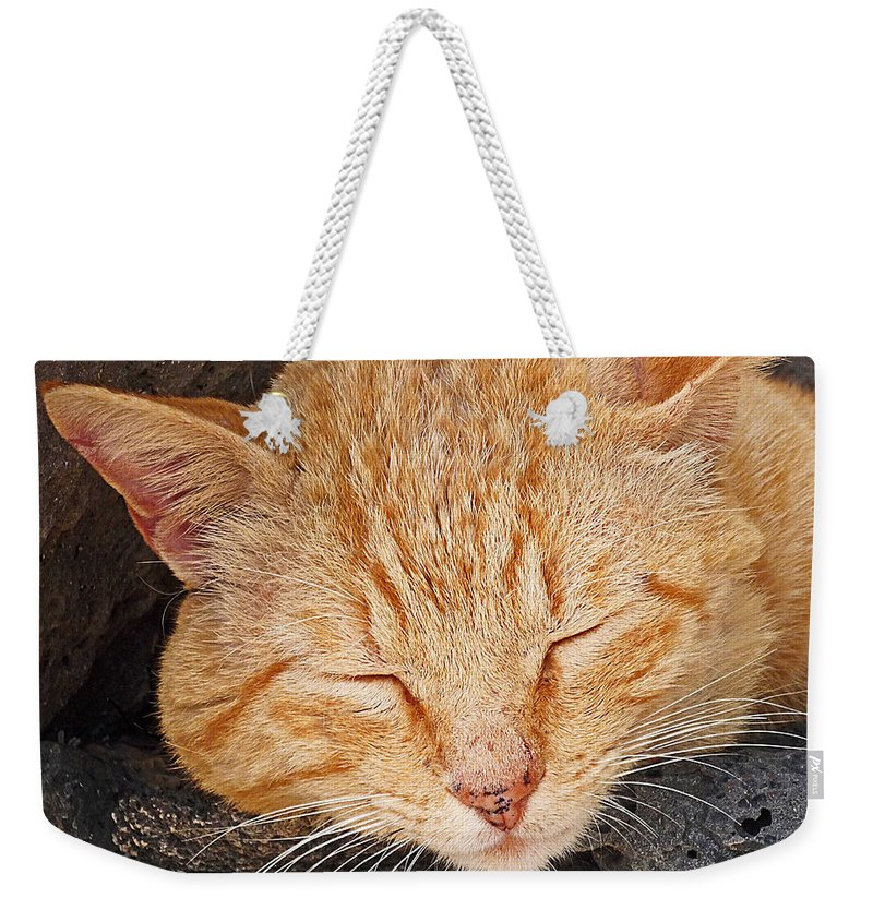 Cat Weekender Tote Bag featuring the photograph Tabby by Charles Stuart