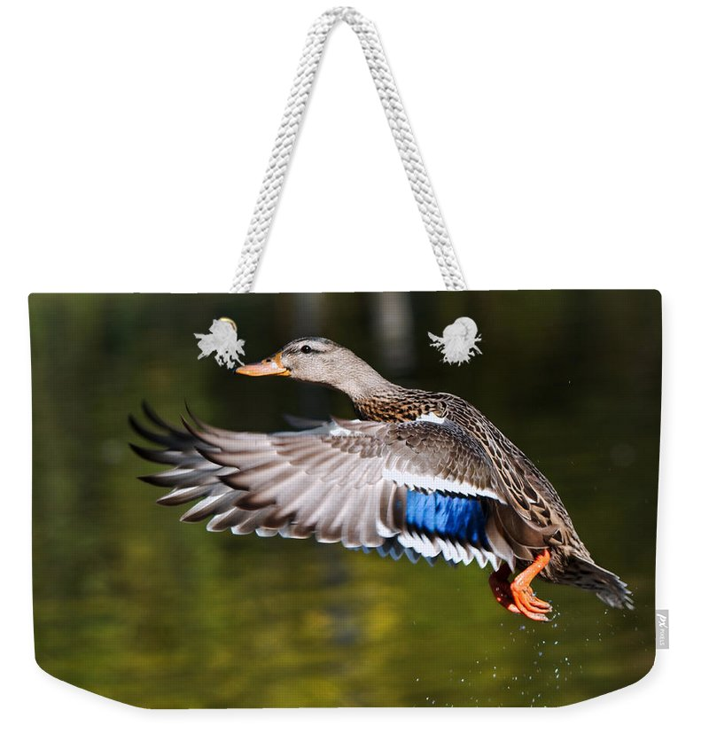Birds Weekender Tote Bag featuring the photograph Take-off - Santa Cruz, California by Jim Bourne